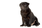 PUP 23 JE0004 01