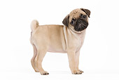 PUP 23 JE0006 01
