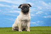 PUP 23 JE0009 01