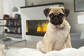 PUP 23 JE0012 01