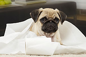 PUP 23 JE0015 01
