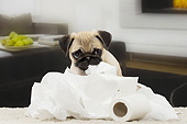 PUP 23 JE0016 01