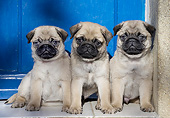 PUP 23 JE0018 01