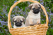 PUP 23 LS0002 01