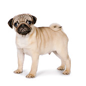 PUP 23 RK0076 01