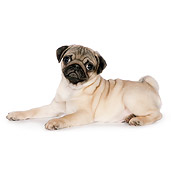 PUP 23 RK0077 01