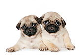 PUP 23 RK0079 01