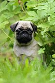 PUP 23 SS0001 01