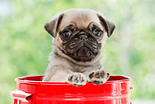 PUP 23 YT0003 01