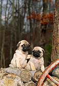 PUP 23 CE0001 01