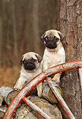 PUP 23 CE0001 02