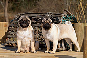 PUP 23 CE0004 01