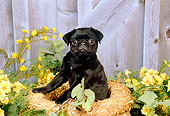PUP 23 FA0003 01