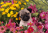 PUP 23 RK0009 03