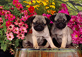PUP 23 RK0011 06