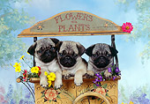 PUP 23 RK0020 08