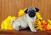 PUP 23 RK0022 03