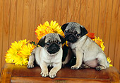 PUP 23 RK0023 05