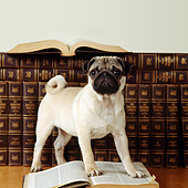 PUP 23 RS0002 01