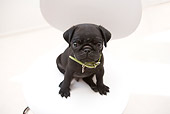PUP 23 YT0001 01