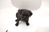 PUP 23 YT0002 01