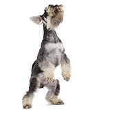 PUP 24 JE0001 01