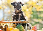 PUP 24 YT0007 01