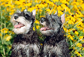 PUP 24 CE0005 01
