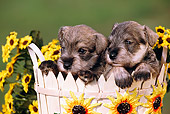 PUP 24 RK0002 15