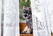 PUP 24 RK0004 02