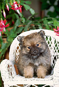 PUP 25 CE0003 01