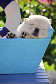 PUP 25 SJ0003 01