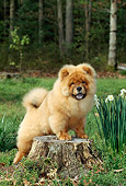 PUP 25 CE0002 01