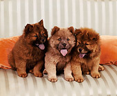 PUP 25 RK0005 01
