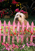 PUP 26 RC0001 01