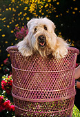 PUP 26 RC0002 01