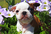 PUP 26 RD0001 01