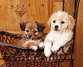 PUP 26 RK0001 06