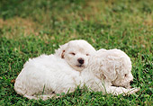 PUP 27 AB0001 01
