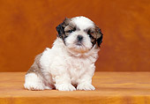 PUP 27 CB0001 01