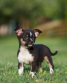 PUP 27 CB0004 01