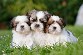 PUP 27 CB0008 01