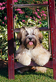 PUP 27 CE0074 01