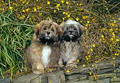 PUP 27 CE0076 01
