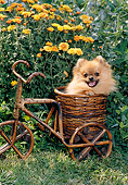 PUP 27 CE0081 01