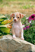 PUP 27 CE0083 01