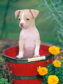 PUP 27 CE0085 01