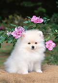 PUP 27 CE0087 01