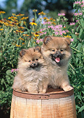 PUP 27 CE0088 01