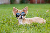 PUP 27 CW0015 01